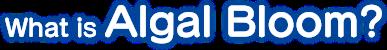 What is Algal Bloom?